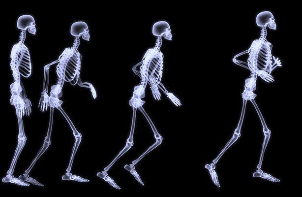 Duro de roer - esqueleto humano