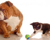 Un perro llamado Bandy