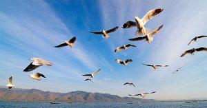 Migración animal