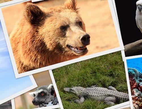 ¿Biodiversidad amenazada?