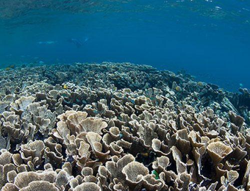 Qué está sucediendo con el mar