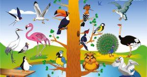 aves - twitter