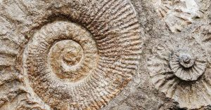 Fósiles - facebook