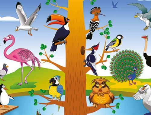 Las aves y sus particularidades