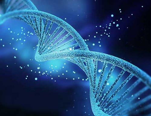 Evidencia de función para el gen de la betaglobina