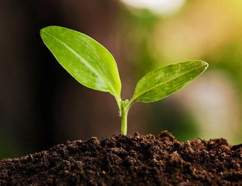 Qué es el proceso de germinación