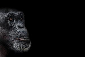 Cuestionando a los evolucionistas