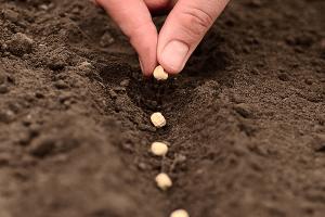 El poder de una semilla