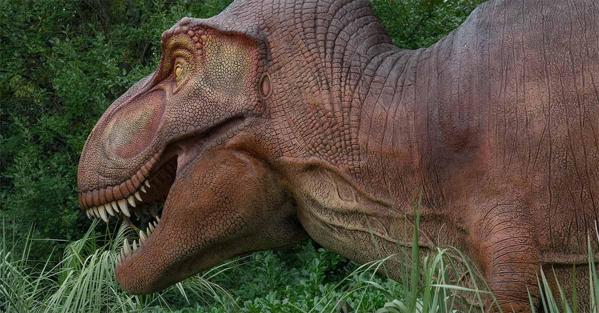 Los Dinosaurios Eran Herbivoros Historia De La Vida Este blog quiere ser una pequeña recopilación de információn sobre animales prehistoricos. los dinosaurios eran herbivoros