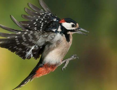 El interesante amortiguador del pájaro carpintero