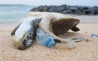 Protección de las especies en peligro de extinción