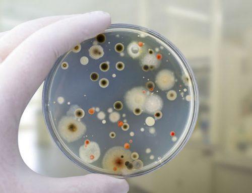 Los microorganismos y el hombre