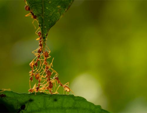 Principales interacciones entre los seres vivos