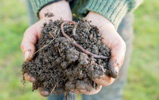 Fertilizantes químicos y naturales