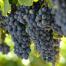 Beneficios del jugo de uva